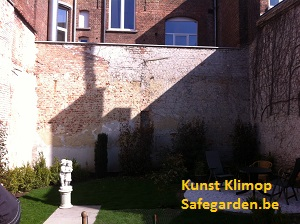 kunst klimop - safegarden